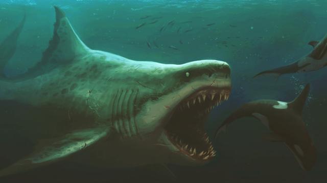 """Cái chết của """"quái vật đại dương"""" Megalodon: Bí ẩn còn thách thức giới khoa học"""