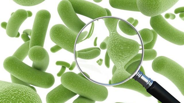 Men vi sinh và men tiêu hoá có khác nhau không? Câu trả lời mẹ nào cũng cần biết