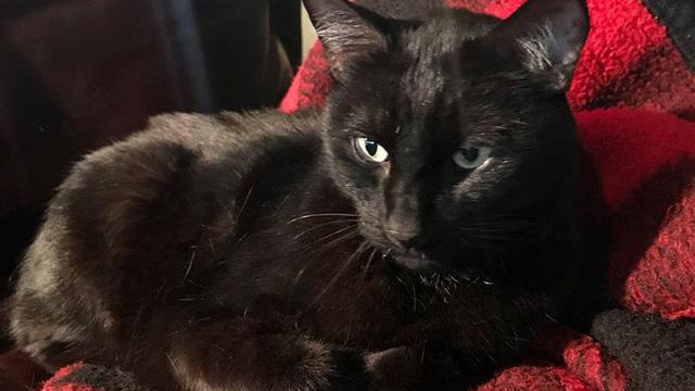 Chú mèo đi lạc 5 năm rồi bất ngờ trở về, nghe câu chuyện về chuyến hành trình ấy, ai cũng ngạc nhiên