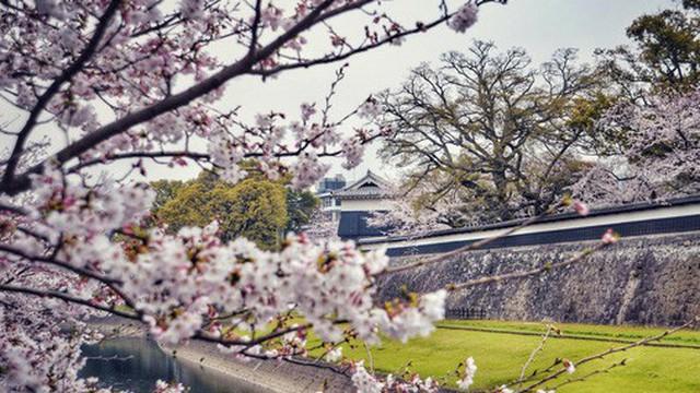 """Ghé thăm Kumamoto - một trong """"Tam đại Quốc bảo thành"""" định hình lịch sử của Nhật Bản"""