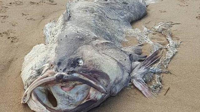 """Phát hiện """"thủy quái"""" trôi dạt vào bờ biển Úc: Đến nay chưa ai biết nó là con gì"""