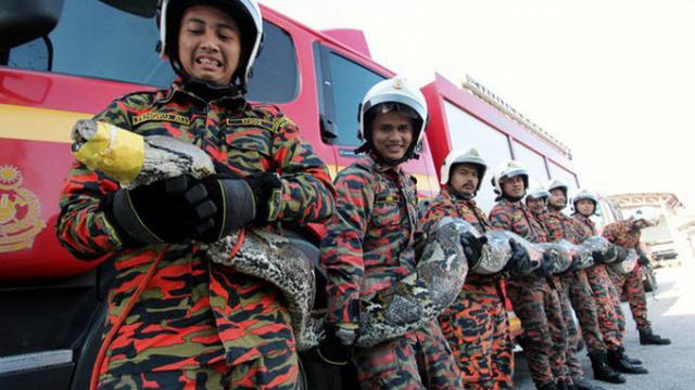 24h qua ảnh: Lính cứu hỏa vận lộn bắt trăn khổng lồ chắn ngang đường