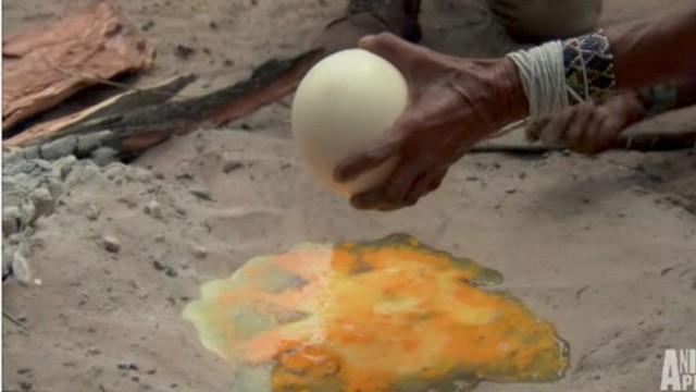 Nhờ nấu giúp quả trứng đà điểu, người đàn ông đinh ninh bà lão sẽ dùng chảo không ngờ bà đổ hết trứng lên cát
