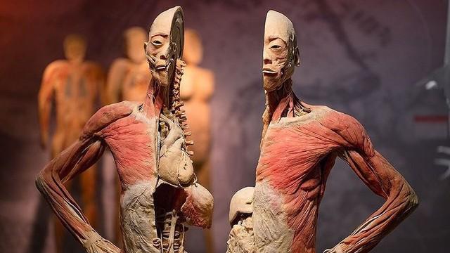 Cục Mỹ Thuật, Nhiếp ảnh và Triển lãm báo cáo về Triển lãm xác người gây tranh cãi