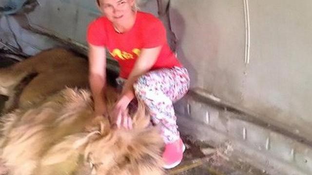Vuốt ve bờm sư tử để chụp hình chung, người phụ nữ suýt bỏ mạng