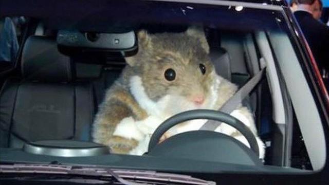 Bà mẹ mua chuột hamster cho con: Ô tô bị phá nát, đặt bẫy 8 lần không bắt được thủ phạm