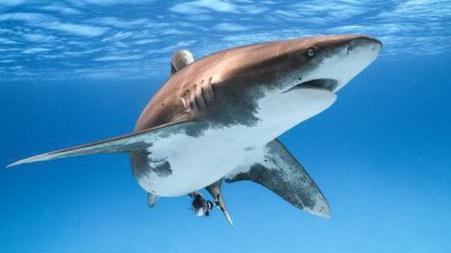 Đi bơi ở vùng biển có cảnh báo nguy hiểm, nam du khách bị cá mập cắn chết