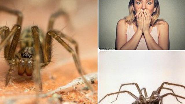 Đọc ngay để tránh: Khoa học mới xác định được thời điểm nhện dễ xuất hiện nhất trong nhà
