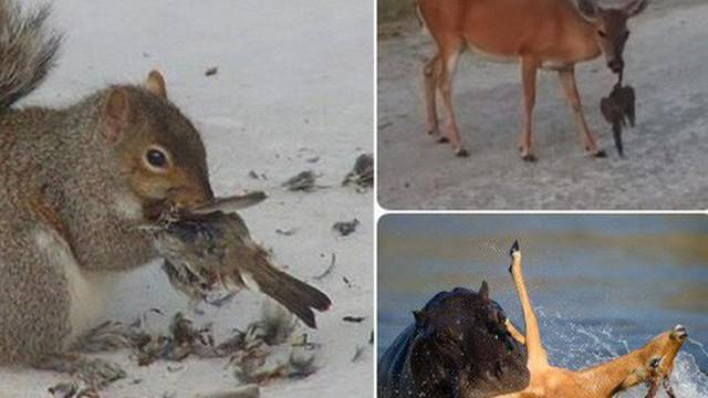 """Cơn """"ác mộng"""" khi gặp những loài động vật mang vẻ ngoài ngoan hiền, nhưng đằng sau thì tàn ác không ngờ"""