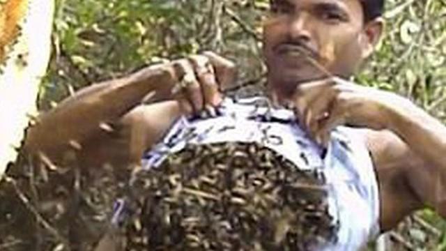 Người đàn ông bốc hàng trăm con ong nhét vào trong áo để thu mật, tự tin tuyên bố miễn nhiễm với nọc ong