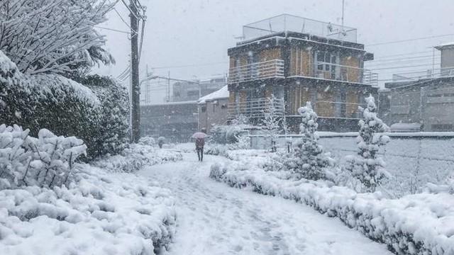 Những hình ảnh về bão tuyết kỷ lục tại Tokyo: Hàng trăm chuyến bay bị hủy, xe đạp đóng băng ngoài trời