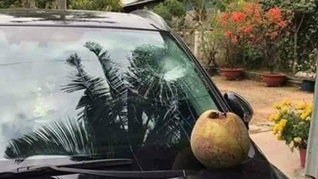 Để ô tô dưới gốc dừa, chủ xe gặp vận hạn cuối năm chỉ nhìn thôi cũng thấy buồn phiền