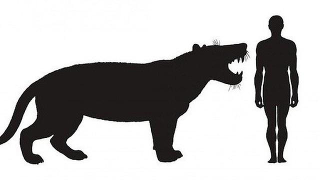 Phục dựng quái thú bí ẩn răng sói, mình sư tử, sọ như tê giác