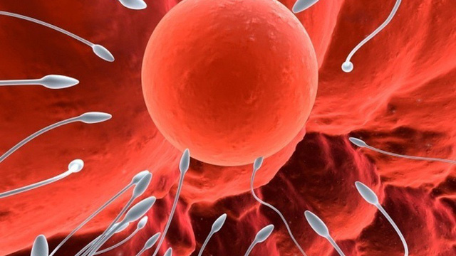 4 yếu tố có thể khiến tinh trùng bất thường, dị dạng: Mọi nam giới đều nên biết để tránh
