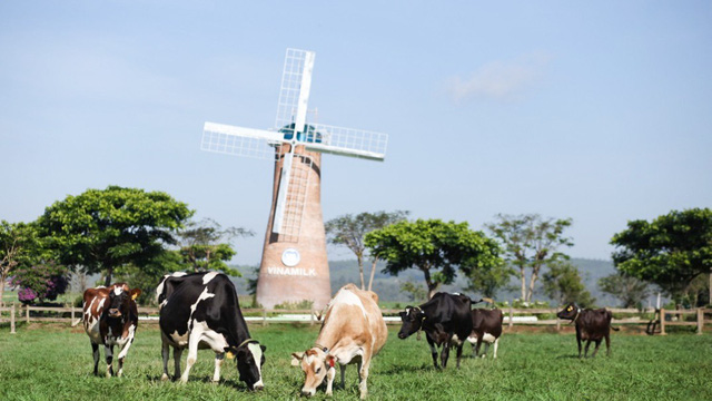 """Có một trang trại bò sữa Organic """"xanh từ A đến Z"""" trên cao nguyên Đà Lạt"""