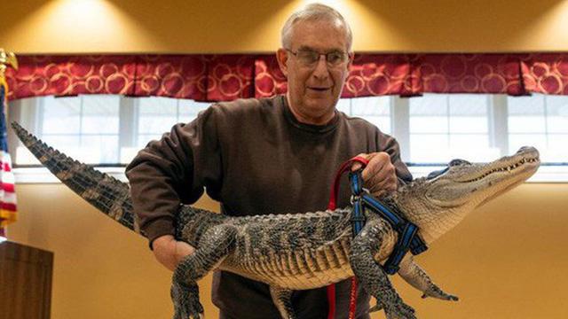 Gặp gỡ Wally: Chú cá sấu đáng yêu nhất quả đất, không cắn ai bao giờ lại còn thích được xoa đầu như chó