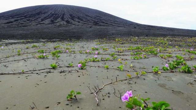 Hòn đảo này chỉ mới ra đời 4 năm trước thôi, vậy mà nay đã khiến giới khoa học phải ngạc nhiên