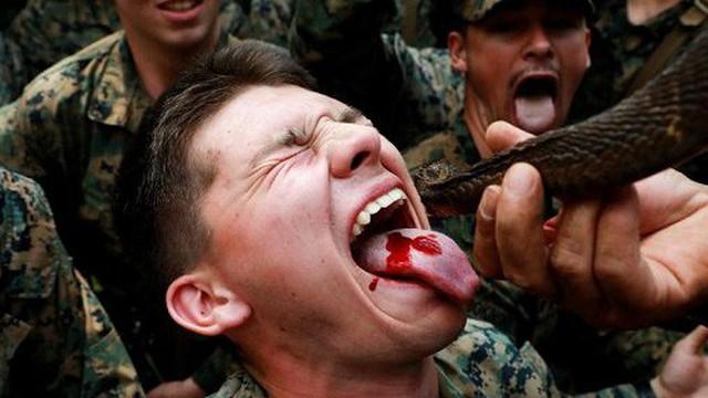 Lính Mỹ uống máu rắn hổ mang, nhai bọ cạp sống để sinh tồn