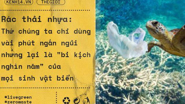 """Rác thải nhựa: Thứ chúng ta chỉ dùng vài phút ngắn ngủi nhưng lại là """"bi kịch nghìn năm"""" của mọi sinh vật biển"""