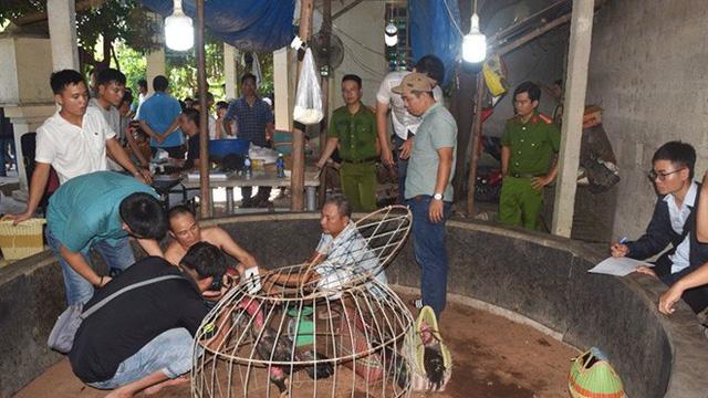 Hàng chục đối tượng 'say máu' ở sới gà bị bắt giữ