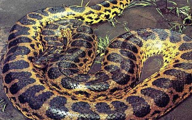 """Vượt trên tất cả, đây mới thực sự là kẻ thù lớn nhất của """"quái vật lòng sông"""" trăn Anaconda"""