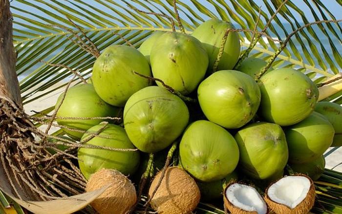 Trị sỏi thận bằng dừa