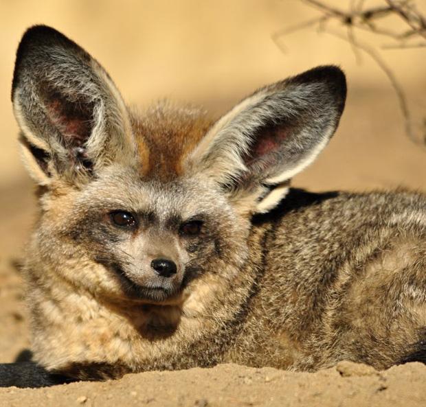 Những loài động vật có ngoại hình sai trái, tác phẩm của mẹ thiên nhiên khi đang khó ở - Ảnh 1.