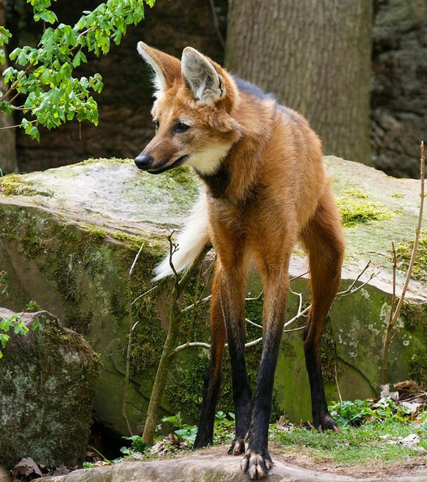Những loài động vật có ngoại hình sai trái, tác phẩm của mẹ thiên nhiên khi đang khó ở - Ảnh 10.