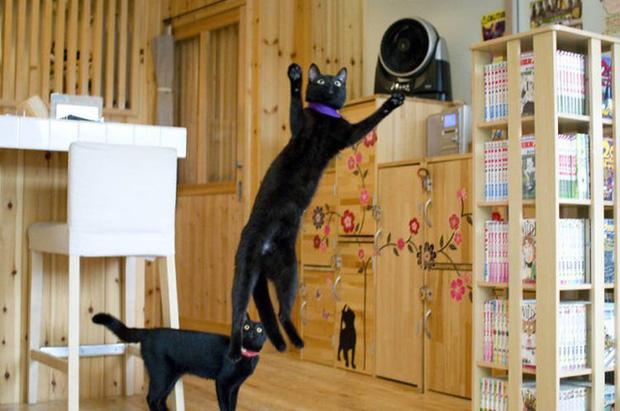 Nekobiyaka - Quán cà phê mèo đen độc nhất vô nhị trên thế giới - Ảnh 1.