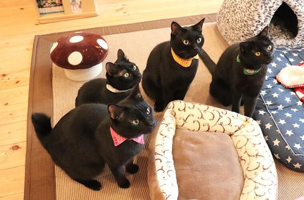 Nekobiyaka - Quán cà phê mèo đen độc nhất vô nhị trên thế giới - Ảnh 4.
