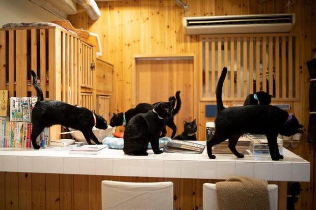 Nekobiyaka - Quán cà phê mèo đen độc nhất vô nhị trên thế giới - Ảnh 5.