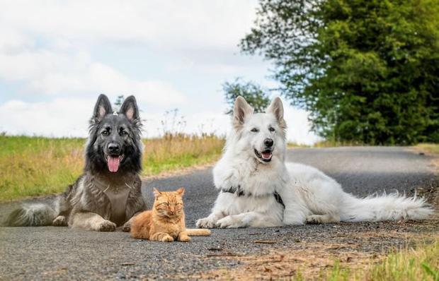 Tôi cứu thằng mèo về nuôi cùng lũ chó, rồi nó quên mình là ai luôn: Chuyện về con mèo tưởng mình là chó đang gây sốt mạng xã hội - Ảnh 2.