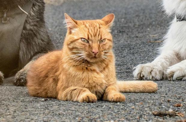 Tôi cứu thằng mèo về nuôi cùng lũ chó, rồi nó quên mình là ai luôn: Chuyện về con mèo tưởng mình là chó đang gây sốt mạng xã hội - Ảnh 3.