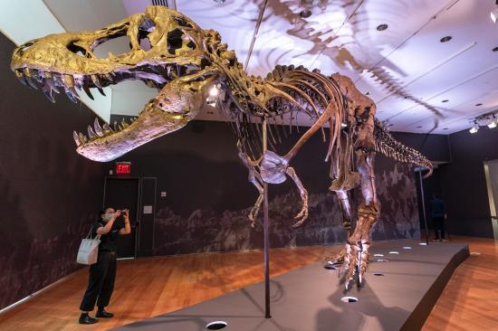 Chiêm ngưỡng một trong những bộ xương khủng long lớn nhất thế giới vừa được bán với mức giá trên trời - Ảnh 2.