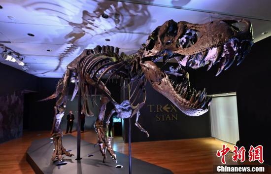Chiêm ngưỡng một trong những bộ xương khủng long lớn nhất thế giới vừa được bán với mức giá trên trời - Ảnh 5.