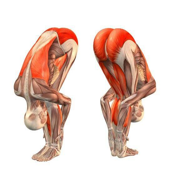 TS Mỹ tiết lộ tư thế cúi gập người: Giảm stress, rất tốt cho gan, thận, làm khỏe cơ bắp - Ảnh 4.