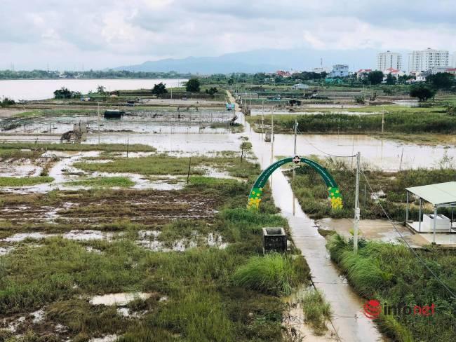 Vựa rau sạch lớn nhất Đà Nẵng tan hoang sau lũ, dân mất trắng - Ảnh 1.