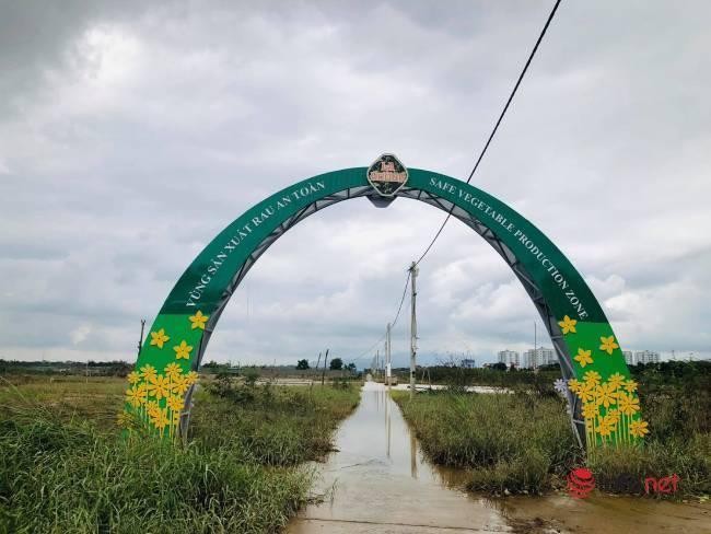 Vựa rau sạch lớn nhất Đà Nẵng tan hoang sau lũ, dân mất trắng - Ảnh 2.