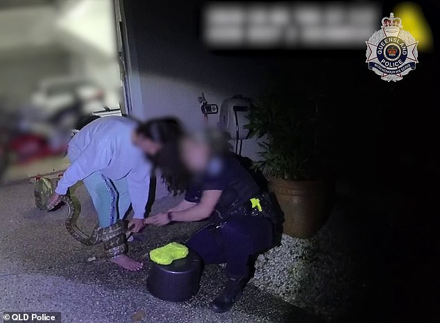 Màn giải cứu hi hữu khiến người xem dựng tóc gáy: Trăn thảm quấn chặt chân người, cảnh sát phải giải nguy - Ảnh 1.