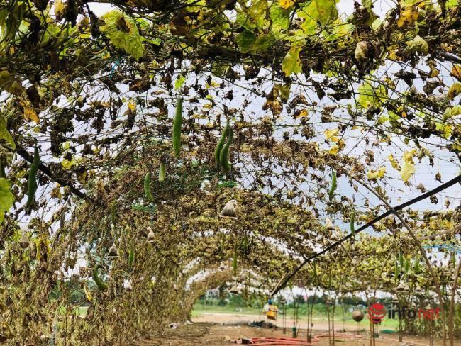 Vựa rau sạch lớn nhất Đà Nẵng tan hoang sau lũ, dân mất trắng - Ảnh 11.