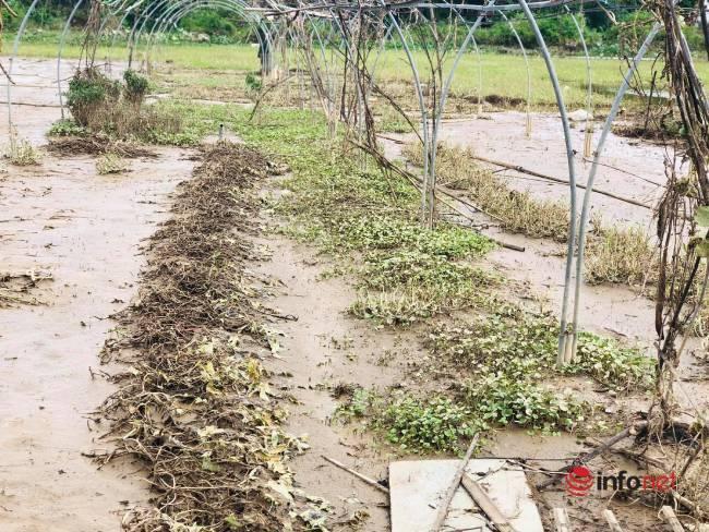 Vựa rau sạch lớn nhất Đà Nẵng tan hoang sau lũ, dân mất trắng - Ảnh 13.