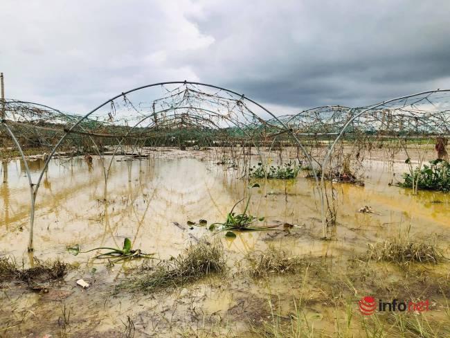Vựa rau sạch lớn nhất Đà Nẵng tan hoang sau lũ, dân mất trắng - Ảnh 4.