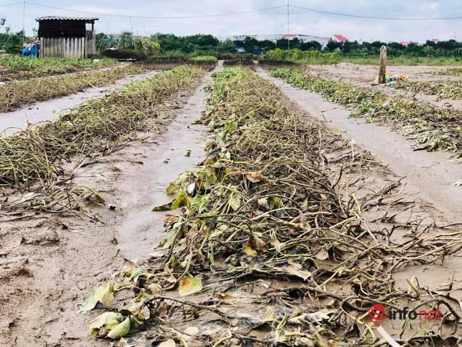Vựa rau sạch lớn nhất Đà Nẵng tan hoang sau lũ, dân mất trắng - Ảnh 6.