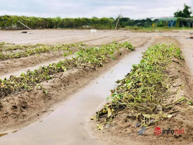 Vựa rau sạch lớn nhất Đà Nẵng tan hoang sau lũ, dân mất trắng - Ảnh 7.