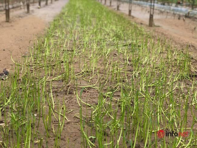 Vựa rau sạch lớn nhất Đà Nẵng tan hoang sau lũ, dân mất trắng - Ảnh 10.