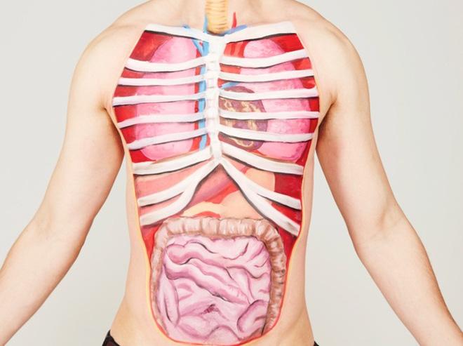 Đố bạn biết: Cơ thể người có bao nhiêu cơ quan nội tạng tất cả? - Ảnh 1.