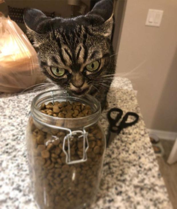 Chú mèo có khuôn mặt cáu kỉnh, lúc nào cũng như đang hờn dỗi cả thế giới nhưng vẫn khiến nhiều người muốn bế về nuôi - Ảnh 11.