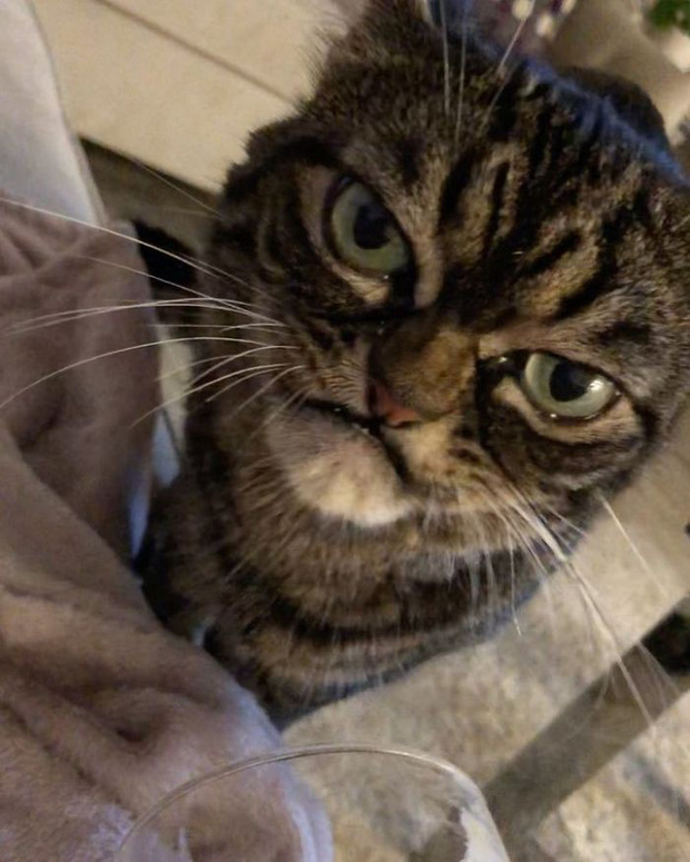 Chú mèo có khuôn mặt cáu kỉnh, lúc nào cũng như đang hờn dỗi cả thế giới nhưng vẫn khiến nhiều người muốn bế về nuôi - Ảnh 3.
