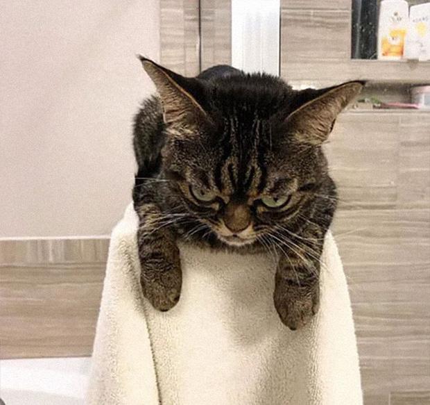 Chú mèo có khuôn mặt cáu kỉnh, lúc nào cũng như đang hờn dỗi cả thế giới nhưng vẫn khiến nhiều người muốn bế về nuôi - Ảnh 7.