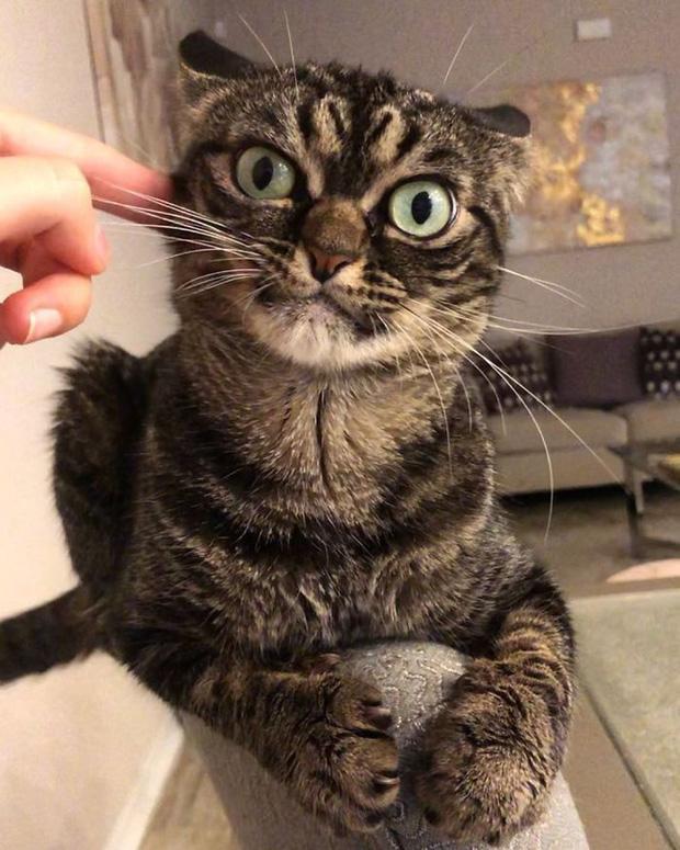 Chú mèo có khuôn mặt cáu kỉnh, lúc nào cũng như đang hờn dỗi cả thế giới nhưng vẫn khiến nhiều người muốn bế về nuôi - Ảnh 8.